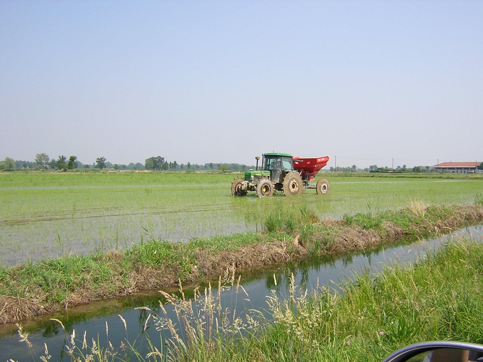concimazione riso