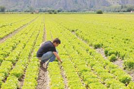 Agricoltori-giovani
