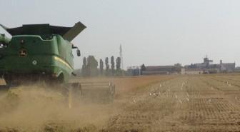 mietitrebbia raccolto risone Azienda Agricola Buffa Pierantonio 3