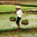 farmers_in_vietnam