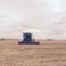 risone mietitrebbia raccolto Azienda Agricola Buffa Pierantonio 5