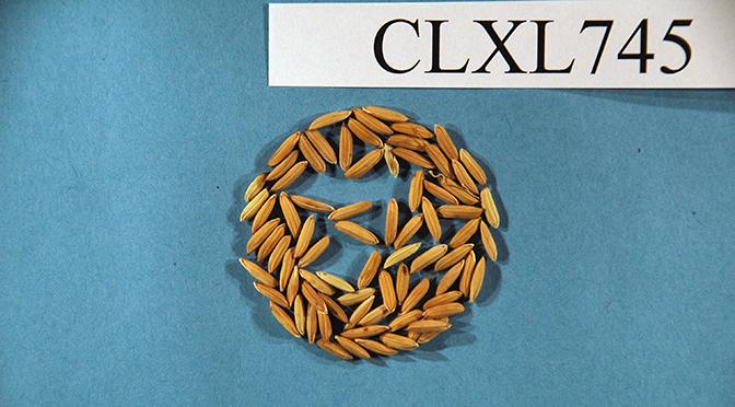 CLXL745