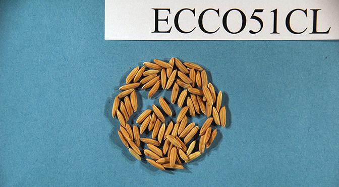 ECCO 51 CL