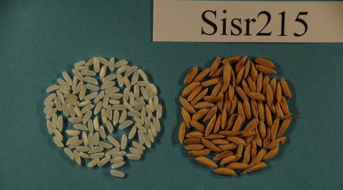 SISR 215