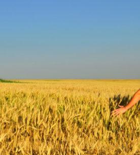 Giovane agricoltore in campo