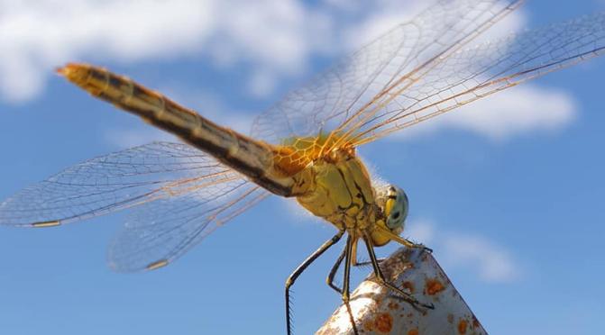 libellula ambiente biodiversità
