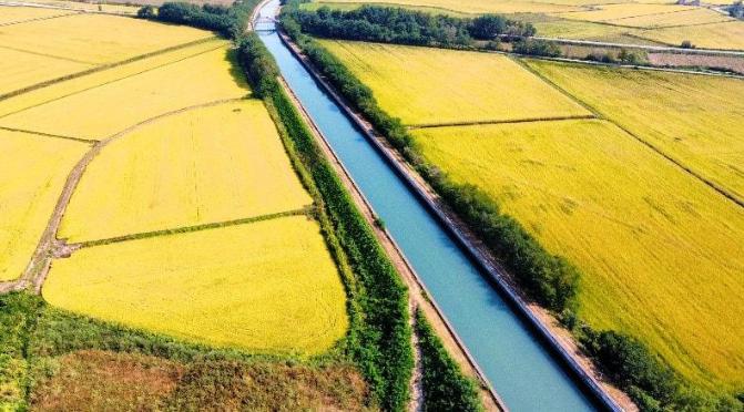 irrigazioni - risaie - canale cavour