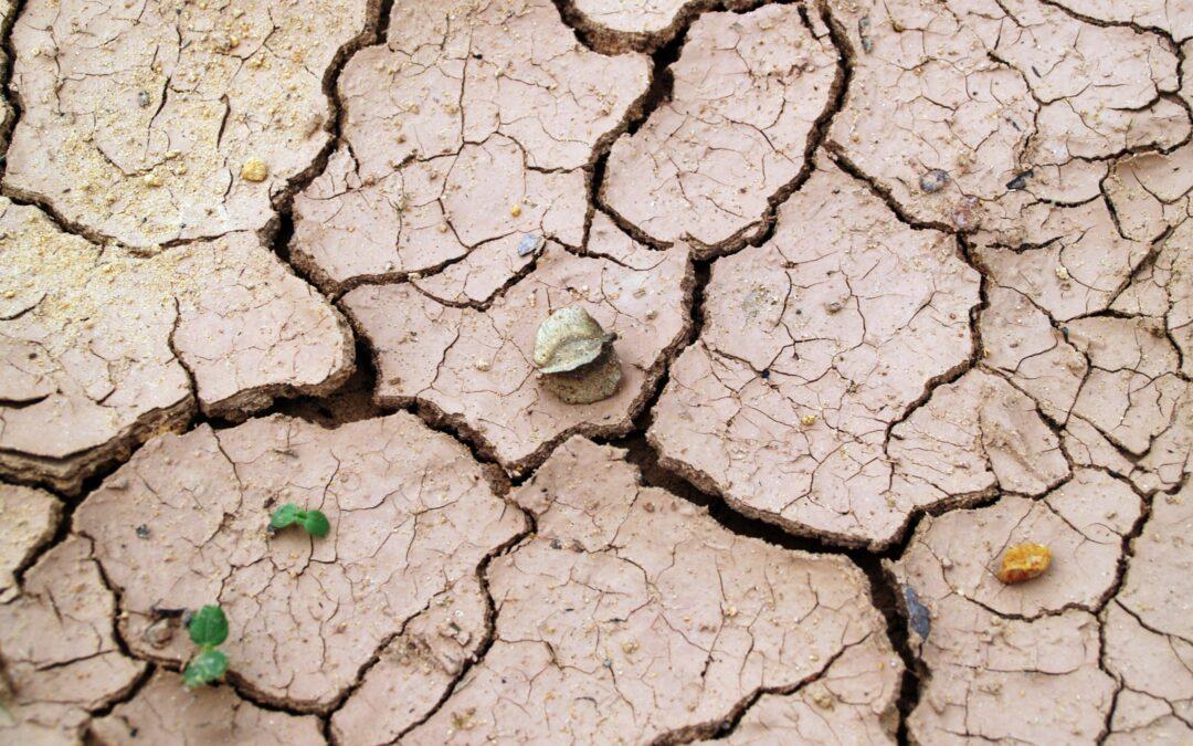 NOI CONTRO IL DESERTO